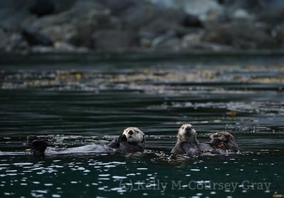 Inian Sea Otters 3