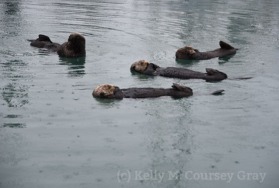 4 otters sleeping 1