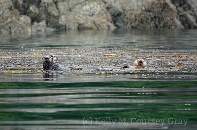 Inian Sea Otters 1