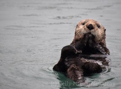 sea otter 2