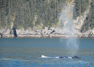kenai fjords humpback blow 2