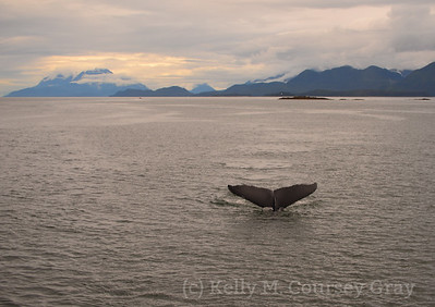 whales tale at sunset 1