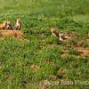Six Red Fox Puppies