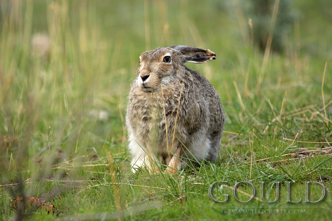 Stoic Hare