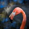 Dreher Park Zoo