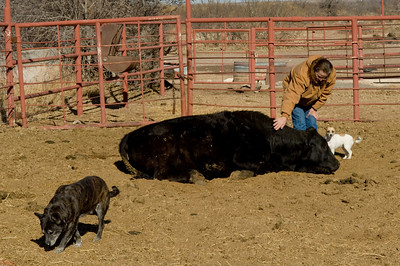 Battle Ax Ranch, NM.  Mandy and her pet steer.  The steer will probably become hamburger this Fall.