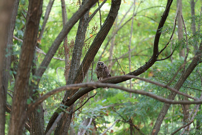 2011_07_26 Owls 007