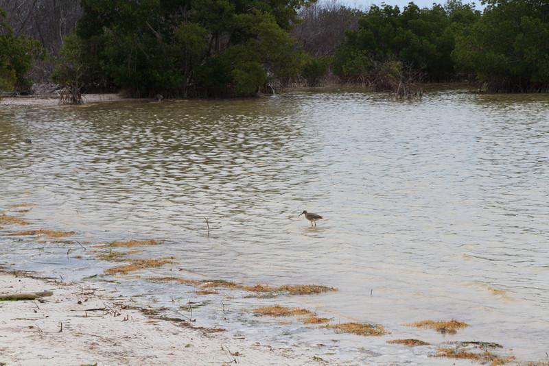 2010 05 05 Florida Keys 015