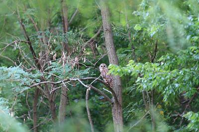 2011_07_26 Owls 006