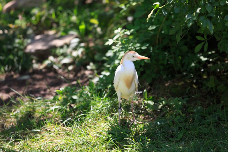 2015_08_20 Kansas City Zoo 014