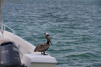 2010 05 02 Islamorada FL 007