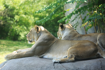 2015_08_20 Kansas City Zoo 022