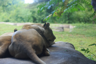 2015_08_20 Kansas City Zoo 024