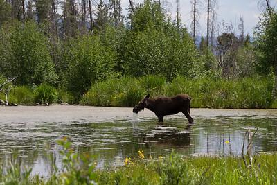 2011_07_05 Wyoming 137