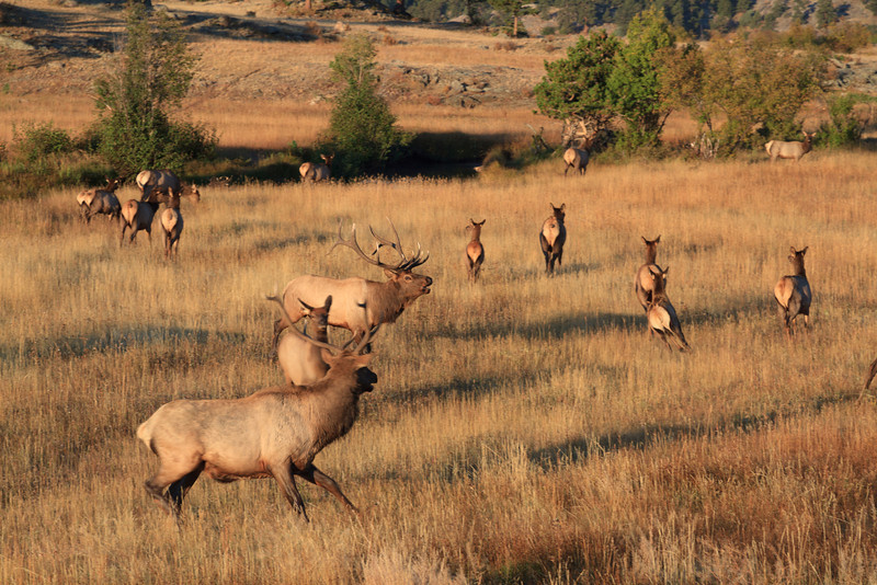 2010 09 21 Estes Park RMNP 103