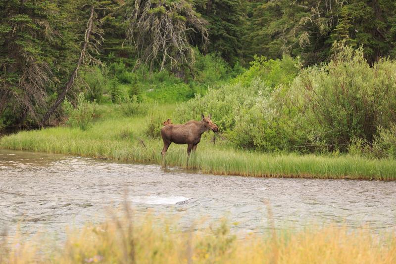 2014_07_14 Glacier National Park 221