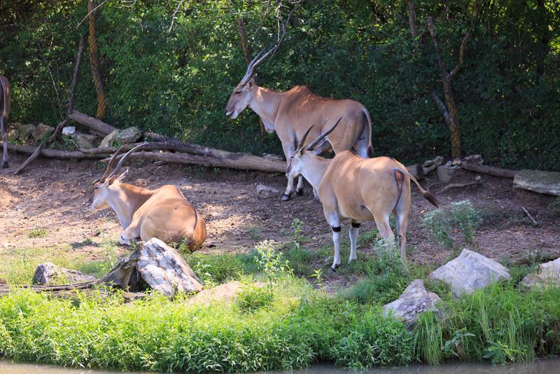 2015_08_20 Kansas City Zoo 018
