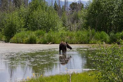2011_07_05 Wyoming 118
