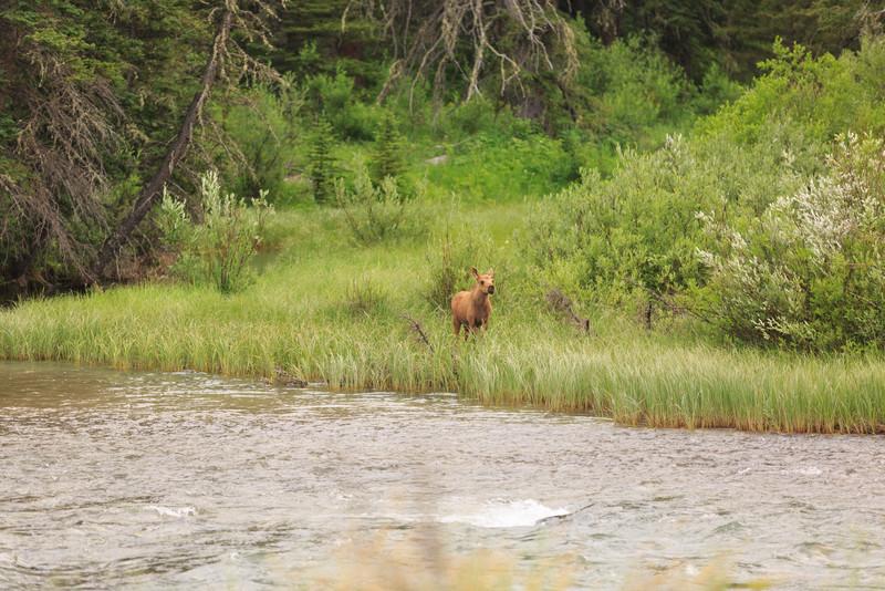 2014_07_14 Glacier National Park 237