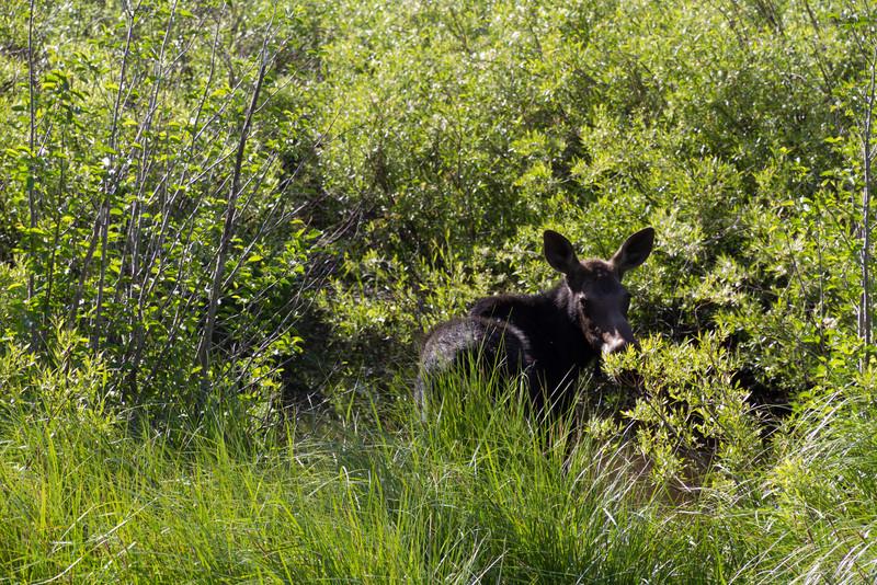 2011_07_07 Wyoming 011