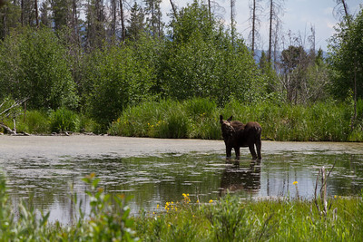 2011_07_05 Wyoming 133