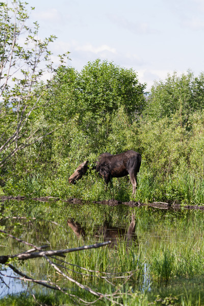 2011_07_08 Wyoming 132