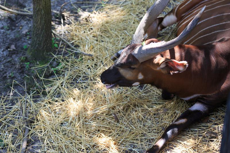 2015_08_20 Kansas City Zoo 039