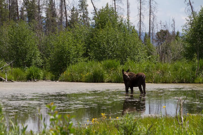 2011_07_05 Wyoming 128