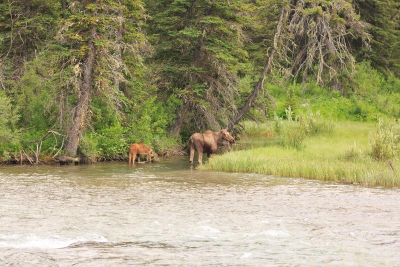2014_07_14 Glacier National Park 198
