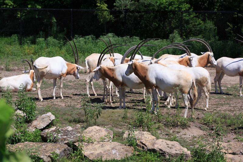 2015_08_20 Kansas City Zoo 017