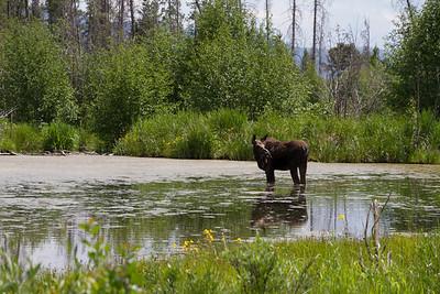 2011_07_05 Wyoming 124
