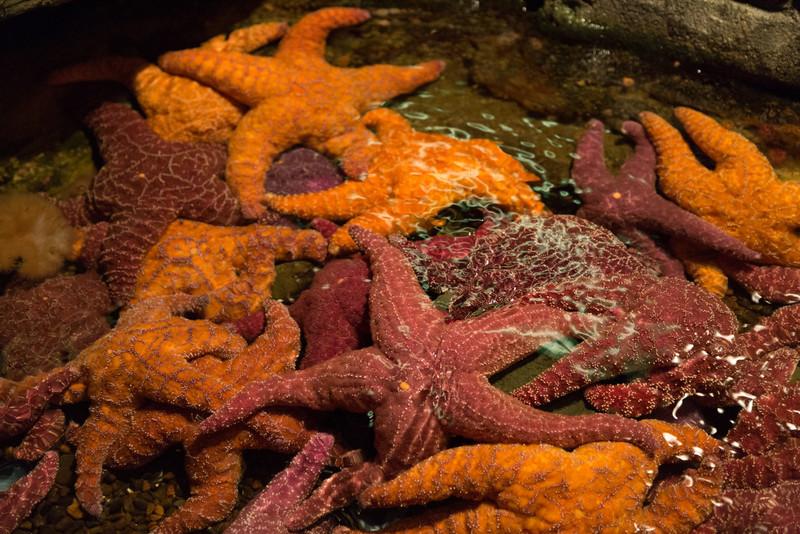 2013_05_29 Seattle Aquarium 008