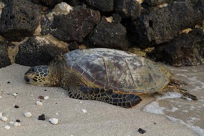 Marine Wildlife