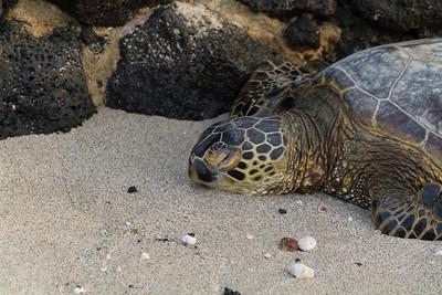 2012_06_09 Green Turtle 008
