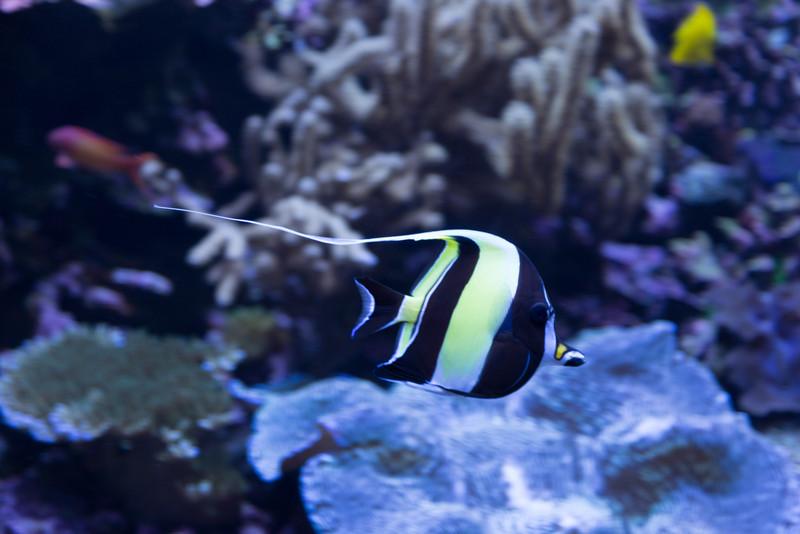 2013_05_29 Seattle Aquarium 014