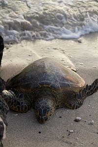 2012_06_09 Green Turtle 010