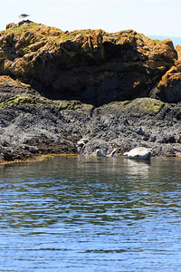 2013_06_04 Orcas Whale Watching 082
