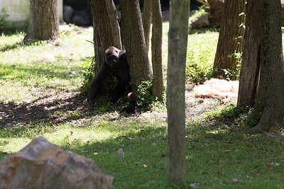 2015_08_20 Kansas City Zoo 044