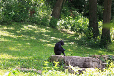 2015_08_20 Kansas City Zoo 029