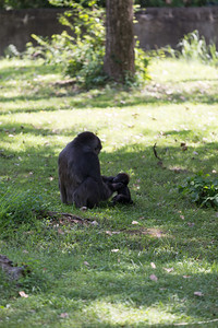 2015_08_20 Kansas City Zoo 051