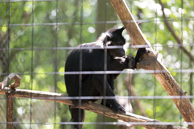 2015_08_20 Kansas City Zoo 038