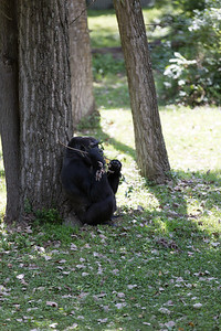 2015_08_20 Kansas City Zoo 042