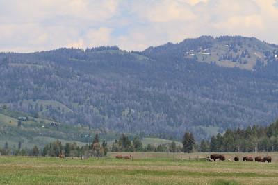 2011_07_05 Wyoming 057