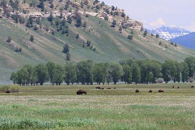 2011_07_05 Wyoming 055