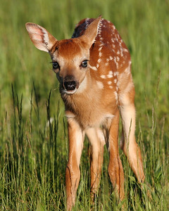 Cute little fawn at Shenandoah National Park