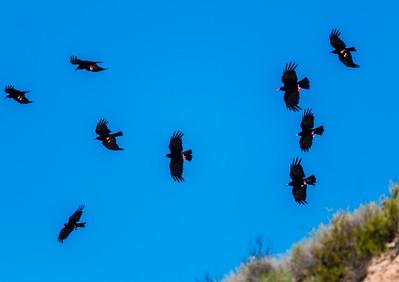 Birding in Catalonia