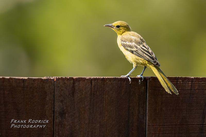 BirdsBackyard0820-80