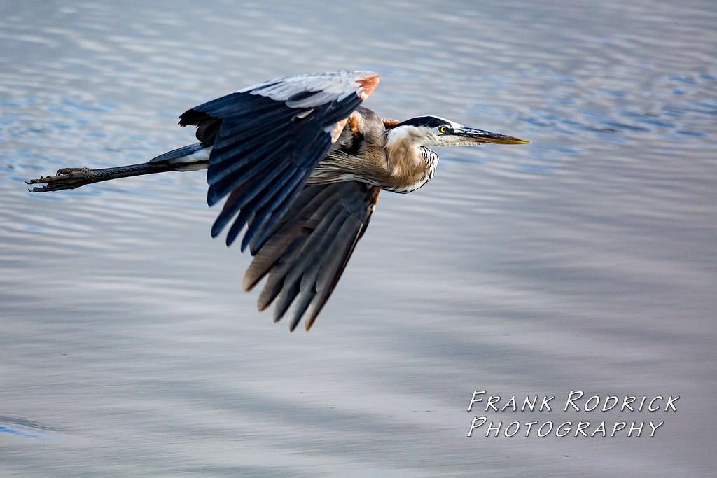 Birds0622-1218