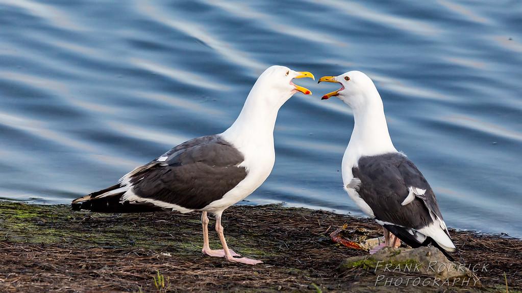 Birds0622-1396