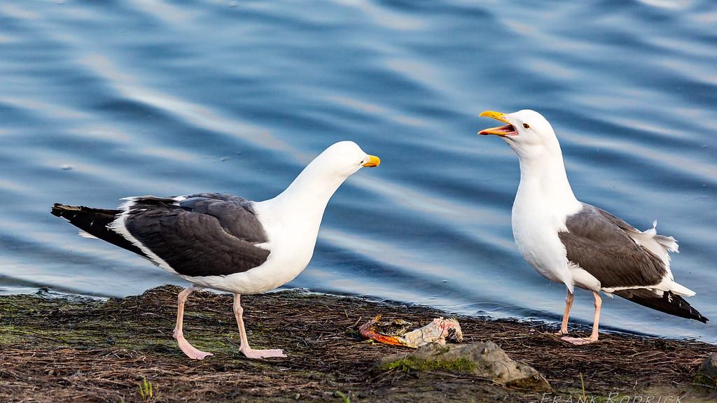 Birds0622-1386
